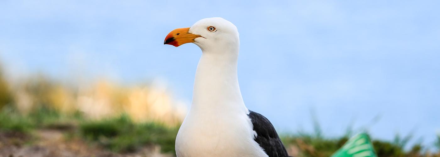 Hero-0231-pacific-gull-conservatory
